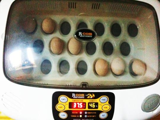 Rcom 20 incubator